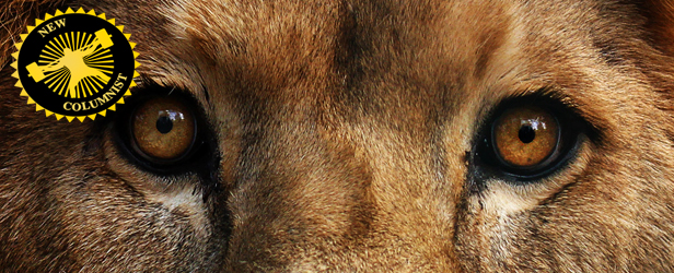 A Lion in Iron: Ladies, Measurements Don't Matter