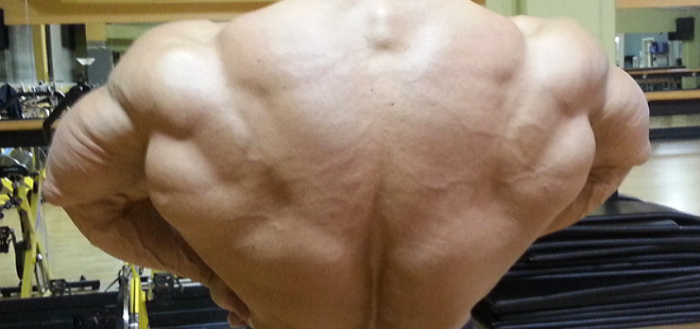 Primary Back Workout