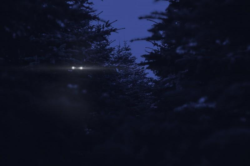Nighteyes_00000 (2)