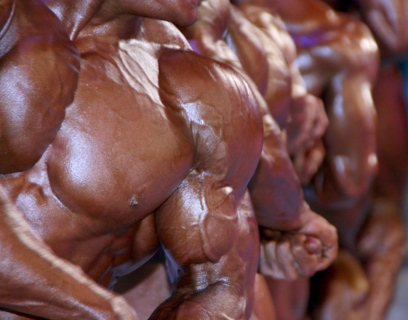 4141536 - huge group of muscular male chests