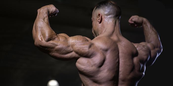 Maximizing Triceps Development