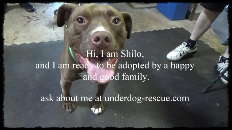 MGG shilo Underdog Rescue
