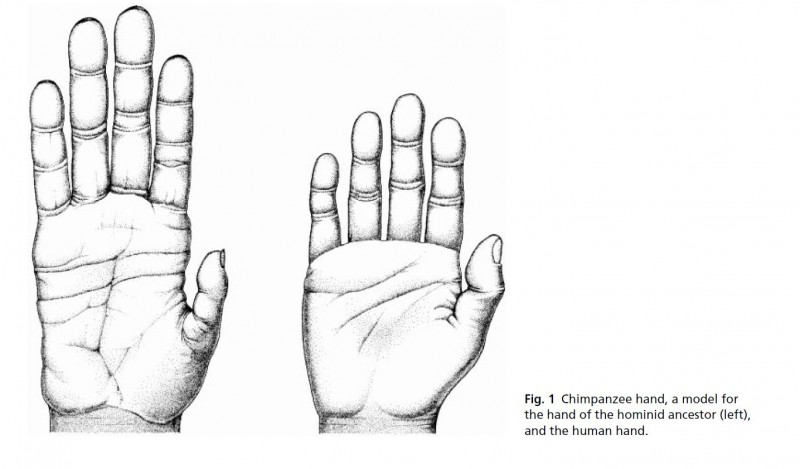 young comparative hands