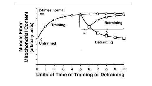 mitochondria training retraining