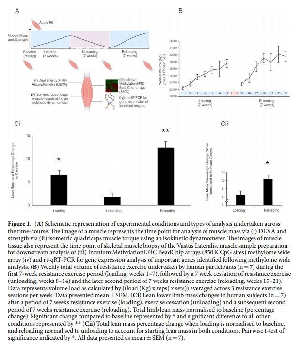 muscle memory epigenetics