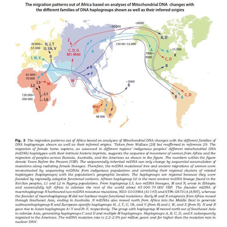 human-migration-patterns